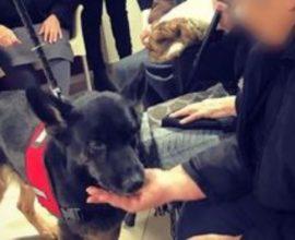 Σκύλοι βοηθοί: Στο πλευρό των ατόμων με άνοια ή Alzheimer