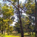 Δήμος Σουφλίου: Δημοπράτηση για την εγκατάσταση συστήματος έγκαιρης ανίχνευσης πυρκαγιών στο δάσος Δαδιάς-Λευκίμης-Σουφλίου