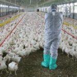 Δήμος Ζίτσας: Προγράμματα κατάρτισης στην Κρεοπαραγωγό Πτηνοτροφία διοργανώνει το Γεωπονικό Πανεπιστήμιο Αθηνών