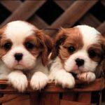 Ημέρα Υιοθεσίας Αδέσποτων Ζώων Συντροφιάς στον Δήμο Περάματος