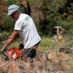 Δήμος Ωραιοκάστρου: Αρχίζει τη Δευτέρα η υλοτόμηση των δέντρων που έχουν πληγεί από το φλοιοφάγο έντομο