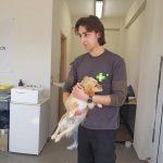 Σε εξέλιξη το πρόγραμμα μαζικών στειρώσεων αδέσποτων ζώων από τον Δήμο Βισαλτίας