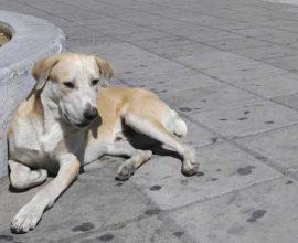 Ο Δήμος Εορδαίας καταδικάζει τα περιστατικά με φόλες στα αδέσποτα ζώα στην Πτολεμαΐδα