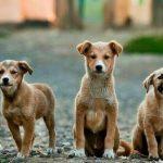 Δήμος Θηβαίων: Ενημέρωση για τη σίτιση των αδέσποτων ζώων