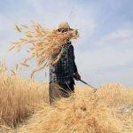 Περιφέρεια Κρήτης: Στο επίκεντρο τα προβλήματα στον πρωτογενή τομέα λόγω της πανδημίας