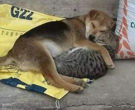 Μήνυμα του Δήμου Νέας Σμύρνης για την Παγκόσμια Ημέρα Αδέσποτων Ζώων