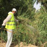 Δήμος Αγίου Δημητρίου: Ολοκληρώθηκε η 2η εφαρμογή για την καταπολέμηση των προνυμφών στο ρέμα της Πικροδάφνης