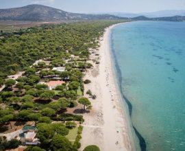 Δήμος Μαραθώνος: Όλη η αλήθεια για το πευκοδάσος του Σχινιά