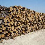 Δήμος Καρδίτσας: Δημοπρασία για καυσόξυλα στην Τ.Κ. Πορτίτσας