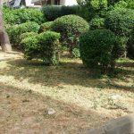 Εργασίες καθαριότητας και συντήρησης πρασίνου στην περιοχή των Αγίων Αναργύρων και του κέντρου Αμαρουσίου