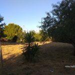 Ο Δήμος Χαλανδρίου συνεχίζει τον καθαρισμό οικοπέδων λόγω αντιπυρικής