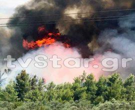 Μεγάλη πυρκαγιά στο πευκοδάσος στο Θεολόγο Φθιώτιδας