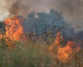 Σε εξέλιξη μεγάλη δασική πυρκαγιά στη Μεγαλόπολη Αρκαδίας