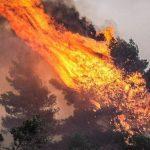 Πυρκαγιά στις Ροβιές Ευβοίας