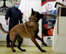 Φινλανδία: Σκύλοι χρησιμοποιούνται για την ανίχνευση του κορονοϊού