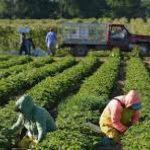 Συναγερμός στη Λακωνία: Κρούσματα σε εργάτες γης στον Δήμο Ευρώτα-Τι είπε ο Δήμαρχος