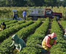 Συναγερμός στη Λακωνία: Κρούσματα σε εργάτες γής στο δήμο Ευρώτα-Τι είπε ο δήμαρχος