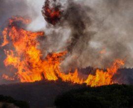 Φωτιά στην Παλλήνη
