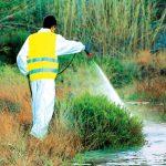 Δήμος Αριστοτέλη: Ψεκασμός καταπολέμησης κουνουπιών στην Ιερισσό