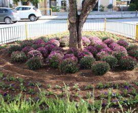 Δήμος Κιλκίς: Ανθοφυτεύσεις σε δημόσιους χώρους της πόλης
