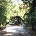 Δήμος Ξυλοκάστρου – Ευρωστίνης: Επίγειος ψεκασμός στο Αισθητικό Δάσος Πευκιά