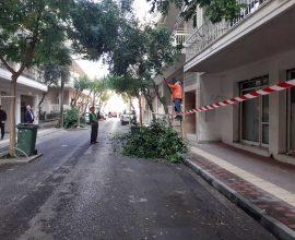 Δήμος Κατερίνης: Συστηματικές κλαδεύσεις & συντήρηση πρασίνου στην πόλη & στις κοινότητες
