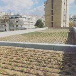 Δήμος Θεσσαλονίκης: Πρασίνισε η ταράτσα του 26ου Γυμνασίου
