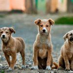 Δήμος Εορδαίας: Εντάχθηκε στο «Φιλοδήμος ΙΙ» το έργο για τα καταφύγια αδέσποτων ζώων