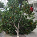 Νέα μήνυση κατέθεσε ο Δήμος Γαλατσίου για τους βανδαλισμούς των δένδρων