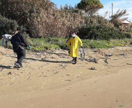 Δήμος Πύργου: Μεγάλη εκστρατεία καθαρισμού της παραλίας Κατακόλου