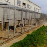 Ο Δήμος Μεγαλόπολης μεριμνά για τα αδέσποτα ζώα