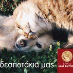 Δήμος Νέας Σμύρνης: Νέες δράσεις για την προστασία των αδέσποτων ζώων