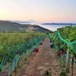Ολοκληρωμένο Σχέδιο για τον Οινοτουρισμό, παρουσιάζει ο Δήμος Αριστοτέλη