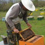 Π.Ε Τρικάλων: Υποβολή αιτήσεων από μελισσοκόμους
