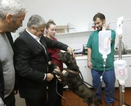 Πατούλης: «Συμβάλλουμε στην περίθαλψη και την προστασία των αδέσποτων ζώων»
