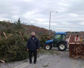 Ανακύκλωση δένδρων στον Δήμο Καλαμαριάς