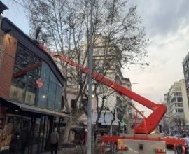 Θεσσαλονίκη: Επιχείρηση του δήμου για να σωθεί ένας πλάτανος 70 ετών στα Λαδάδικα