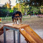 Πάρκα σκύλων στον Δήμο Κορυδαλλού