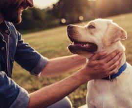 ΥΠΕΣ: Ένα νέο, σύγχρονο θεσμικό πλαίσιο για τα ζώα συντροφιάς και τα αδέσποτα ζώα