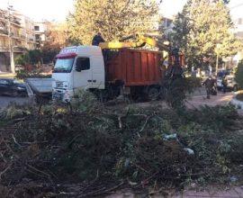 Δήμος Παπάγου-Χολαργού: Ξεπέρασαν του 200 τόνους τα κλαδιά που έχουν συλλεχθεί και οδηγηθεί προς κομποστοποίηση