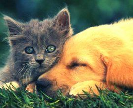 Νέο νομοσχέδιο «ασπίδα» στα ζώα συντροφιάς και τα αδέσποτα
