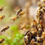 Περιφέρεια Θεσσαλίας: Προστασία μελισσών από χημικούς ψεκασμούς