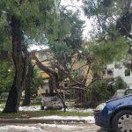 Δήμος Χαλανδρίου: 255 τόνοι κλαδεμάτων μετά τη Μήδεια – Τεράστια η απώλεια φυτικού κεφαλαίου