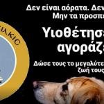 Δήμος Κιλκίς: Δυναμική ώθηση στην υιοθεσία των αδέσποτων ζώων συντροφιάς