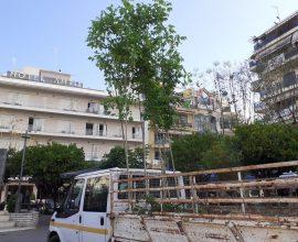 Δήμος Αγρινίου: Φύτευση δένδρων στην πλατεία Δημοκρατίας