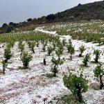 ΠΙΝ: Ζημιές σε αμπελοκαλλιέργειες και ελαιόδεντρα προκάλεσε η σφοδρή χαλαζόπτωση στην Κεφαλονιά