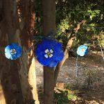 Δήμος Χαλανδρίου: Γέμισε μπλε παπαρούνες η Ρεματιά για την Παγκόσμια Ημέρα Περιβάλλοντος