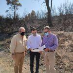 Δήμος Διονύσου: Άμεσα αναδασωτέες οι καμένες εκτάσεις