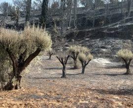 Δήμος Αιγιαλείας: Σε κατάσταση έκτακτης ανάγκης Ζήρια, Καμάρες και Λόγγος