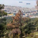 Παρατείνεται η απαγόρευση κυκλοφορίας στο Δασόκτημα του Δήμου Ωραιοκάστρου